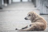 Programa vai oferecer comida e abrigo para animais de rua