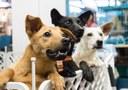 Selo vai reconhecer influenciadores digitais que atuam pela causa animal